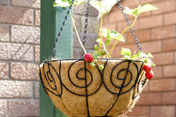 Living Foods Garden -26
