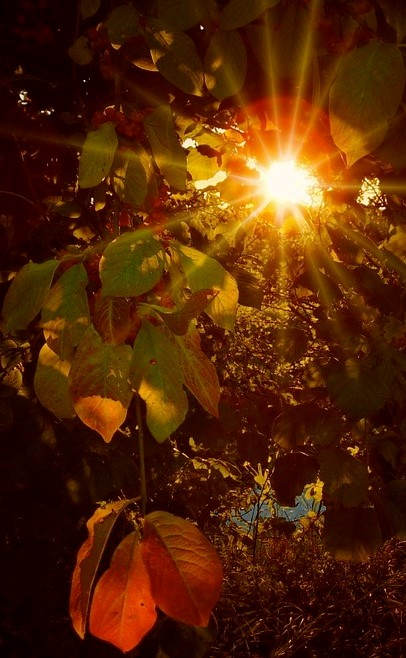 Autumn Equinox by Nicky