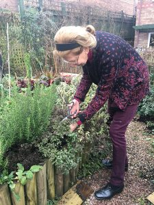 An Easy Winter Salad Recipe - Elaine in the garden