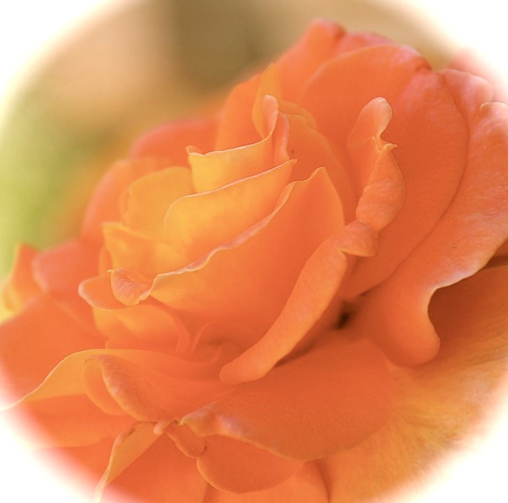 July's colour of the month - peach